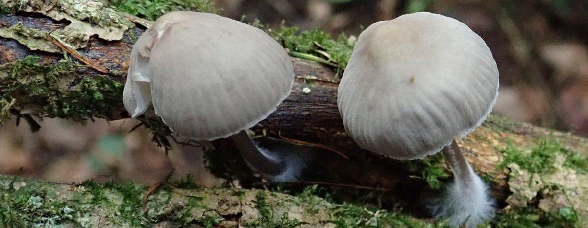 Pembrokeshire Fungus Recording Network